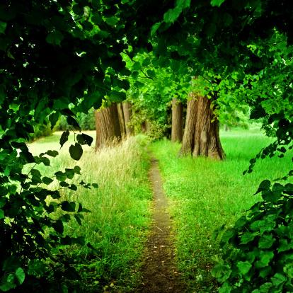 おとぎ話「森のパス」:スマホ壁紙(17)