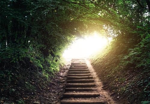 Hope - Concept「Forest Path」:スマホ壁紙(4)