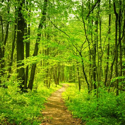 小道「森のパス」:スマホ壁紙(11)