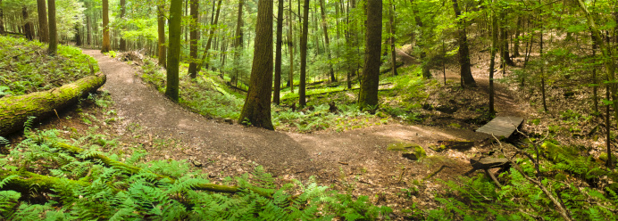 Wilderness Area「Forest Path with Rustic Bench and Wooden Footbridge Panorama」:スマホ壁紙(17)