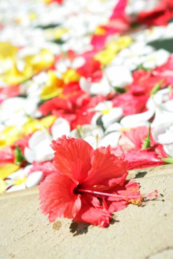 Northern Mariana Islands「Flower」:スマホ壁紙(3)