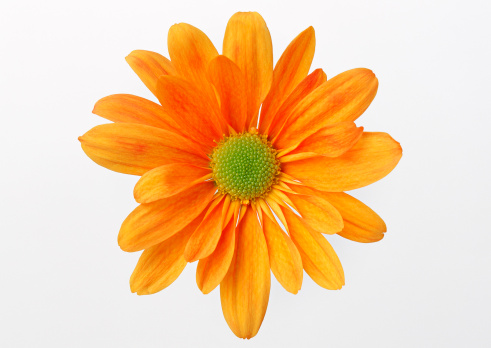 花「Flower」:スマホ壁紙(2)