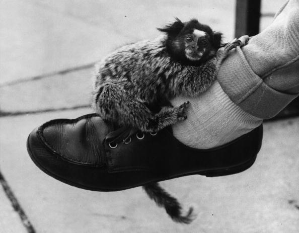 William Vanderson「Four-Legged Anklet」:写真・画像(6)[壁紙.com]