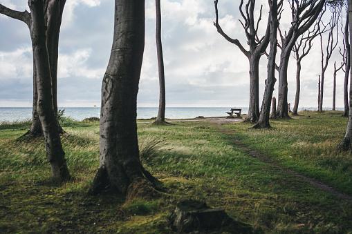 Fantasy「Germany, Nienhagen, view to the sea from Gespensterwald」:スマホ壁紙(15)