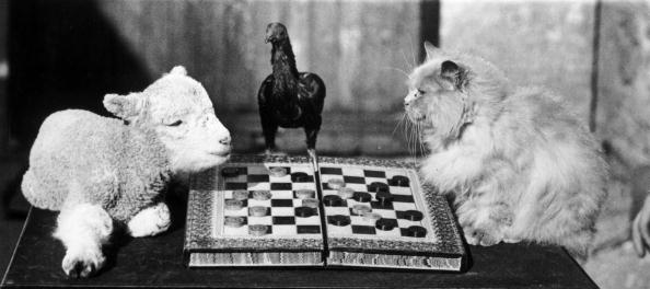 Humor「Animal Draughts」:写真・画像(12)[壁紙.com]