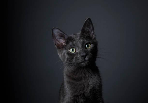 Stunning Black Kitten - The Amanda Collection:スマホ壁紙(壁紙.com)
