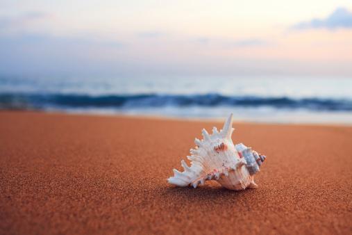 殻「シェルビーチで」:スマホ壁紙(10)