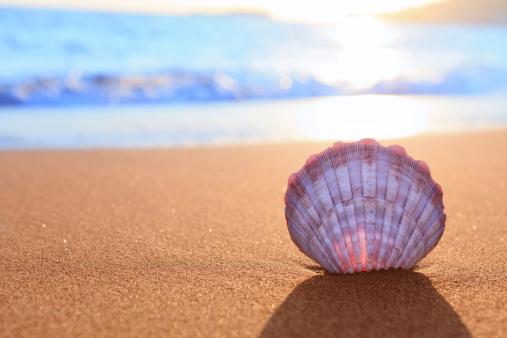 ビーチ「シェルビーチで」:スマホ壁紙(4)