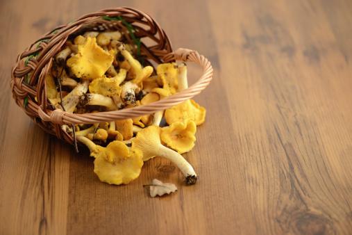 Fungus Gill「golden chanterelle mushroom」:スマホ壁紙(6)