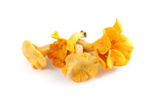 Fungus Gill「golden chanterelle mushroom  (Cantharellus cibarius)」:スマホ壁紙(19)