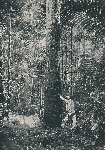 Tropical Tree「Collecting Rubber」:写真・画像(3)[壁紙.com]