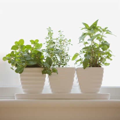植物「Herbs in pots on windowsill」:スマホ壁紙(6)