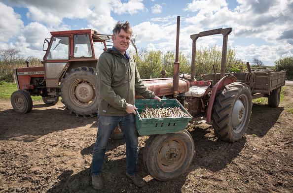 Asparagus「Asparagus Farming In Devon」:写真・画像(11)[壁紙.com]