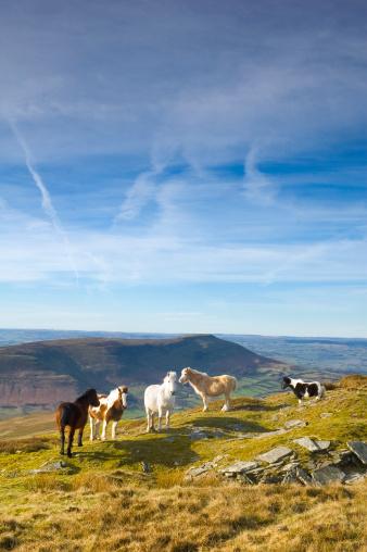 Animals In The Wild「Ponies Standing on Grassy Mountain Ridge」:スマホ壁紙(1)