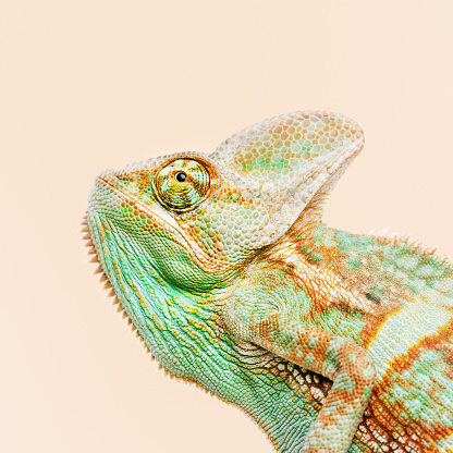 Making A Face「Cute chameleon portrait looking away」:スマホ壁紙(5)