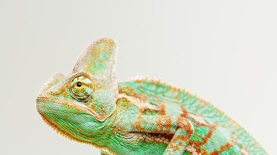 Making A Face「Cute chameleon profile portrait」:スマホ壁紙(4)