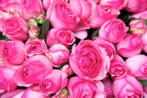薄ピンク「鮮やかなピンクのバラのブーケフルフレームフクシア」:スマホ壁紙(7)