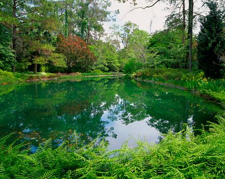 Tallahassee「Florida, Tallahassee, Alfred B. Maclay Gardens State Park」:スマホ壁紙(12)
