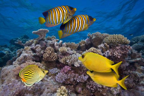 Queensland「Colorful Fish on Great Barrier Reef, Australia」:スマホ壁紙(8)