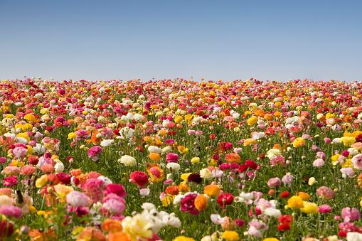 春「永遠の花」:スマホ壁紙(9)