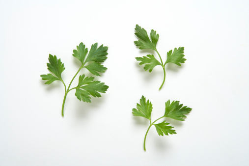 Parsley「Parsley branches」:スマホ壁紙(2)