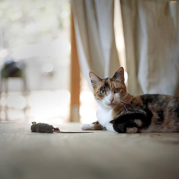Cat on floor with dead mouse:スマホ壁紙(壁紙.com)