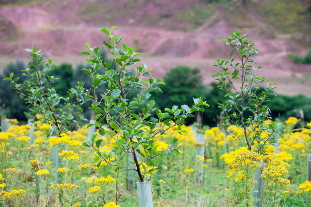 Sand Martin Wood in Faugh near Carlisle, Cumbria, UK, was acquired by the carbon offset company co2balance in September 2006. It has been planted with a broad mix of native trees over 6 hectares and is managed for wildlife as well as the companies offset:ニュース(壁紙.com)