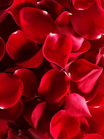 花びら「ローズの葉」:スマホ壁紙(16)