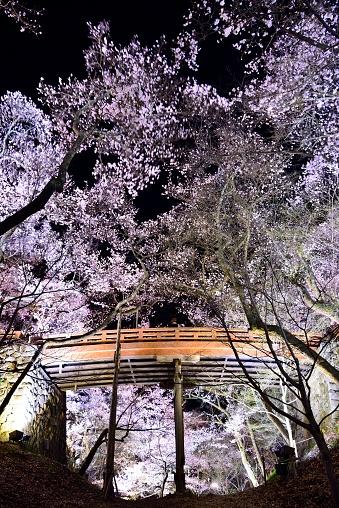 夜桜「Sakurakumo Bridge」:スマホ壁紙(0)
