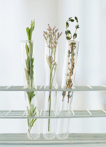 Thyme「Herbs in test tubes」:スマホ壁紙(17)