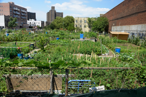 Environmental Issues「Urban farm plot in Coney Island, New York」:スマホ壁紙(19)
