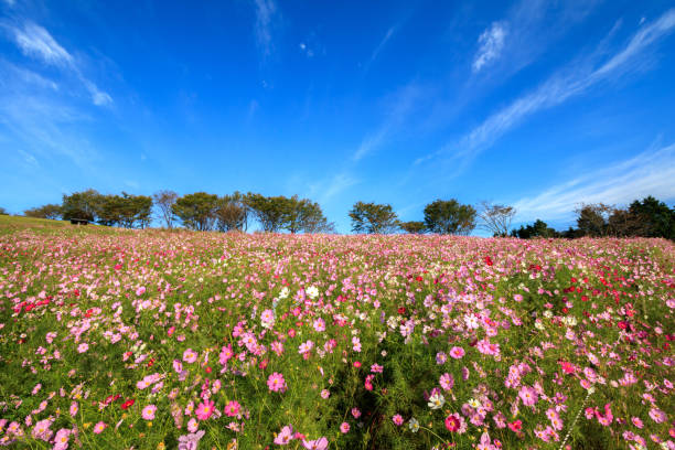 View Of Flowers Growing In Field:スマホ壁紙(壁紙.com)