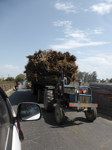 Grass Family「Tractor Loaded With Sugar Cane」:写真・画像(12)[壁紙.com]