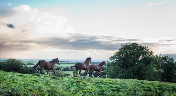 Horse「Horses running on green landscape」:スマホ壁紙(2)