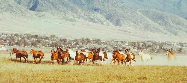 Stallion「Horses Running in Utah USA」:スマホ壁紙(7)