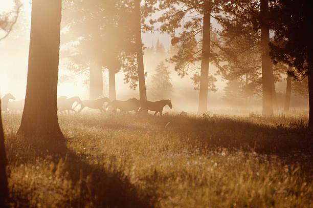 Horses running in forest, early morning mist, side view:スマホ壁紙(壁紙.com)