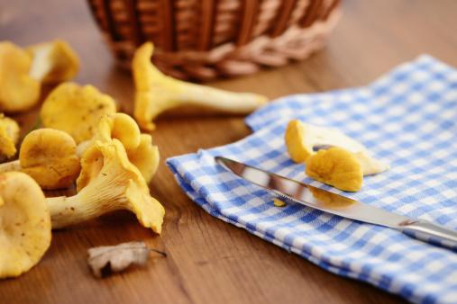 Fungus Gill「cleaning golden chanterelle mushroom」:スマホ壁紙(18)