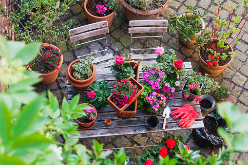 Planting「Gardening, different spring and summer flowers, gardening tools on garden table」:スマホ壁紙(1)