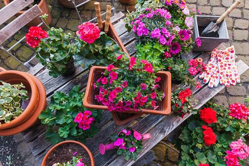 Planting「Gardening, different spring and summer flowers, gardening tools on garden table」:スマホ壁紙(15)