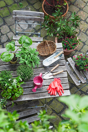 Planting「Gardening, different medicinal and kitchen herbs and gardening tools on garden table」:スマホ壁紙(5)
