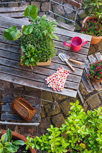 Planting「Gardening, different medicinal and kitchen herbs and gardening tools on garden table」:スマホ壁紙(9)