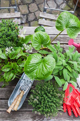 日曜大工「Gardening, different medicinal and kitchen herbs and gardening tools on garden table」:スマホ壁紙(6)