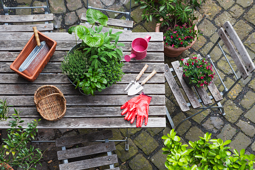 Planting「Gardening, different medicinal and kitchen herbs and gardening tools on garden table」:スマホ壁紙(8)