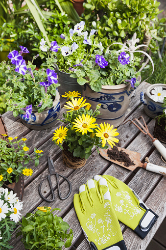 Horticulture「Different summer flowers and gardening tools on garden table」:スマホ壁紙(4)
