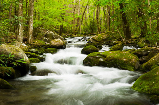 Roaring Fork River「Lush spring forest and river.」:スマホ壁紙(5)