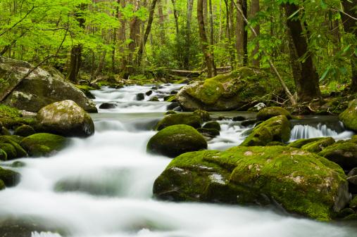 Roaring Fork River「Lush spring forest and river」:スマホ壁紙(14)