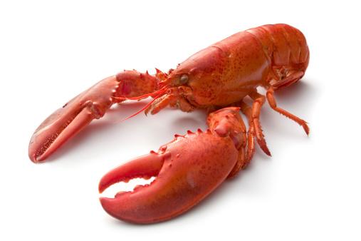 Crustacean「Seafood: Lobster」:スマホ壁紙(19)