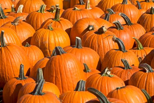 Harvesting「Pumpkins」:スマホ壁紙(6)