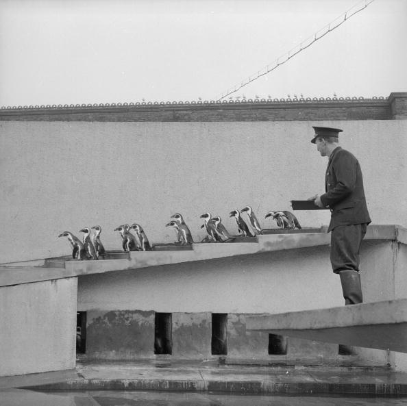 Douglas Miller「Obliging Penguins」:写真・画像(6)[壁紙.com]