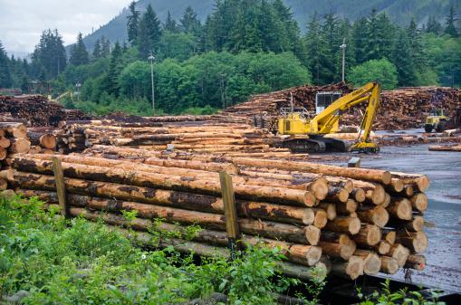 Lumber Industry「Logging industry」:スマホ壁紙(5)